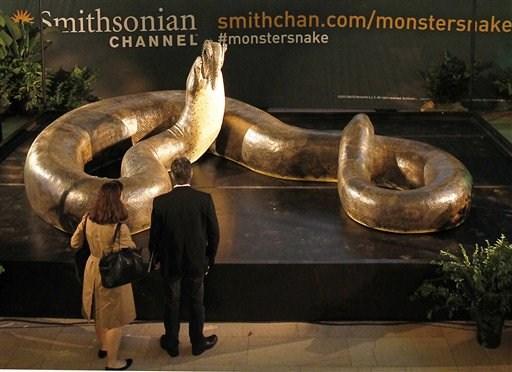 Największy wąż świata - Titanoboa - replika