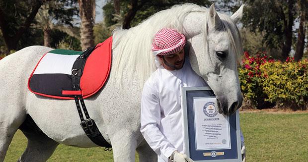 Koń chodzący nadwóch nogach - rekord