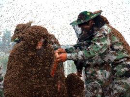 Największy płaszcz z pszczół - rekord Guinessa
