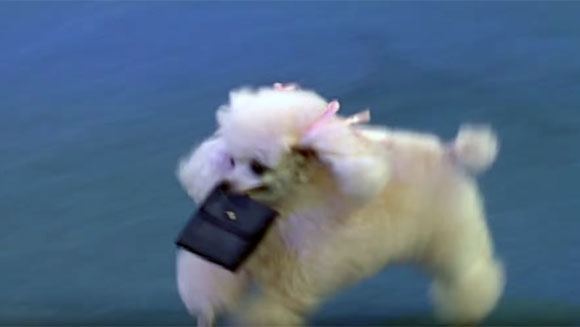 Psie sztuczki - rekord