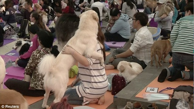 Joga dla psów - rekord Guinnessa