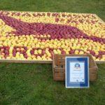 Największa mozaika z jabłek