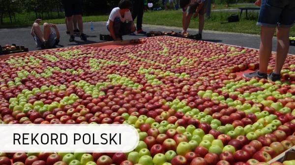 Polska - jabłka