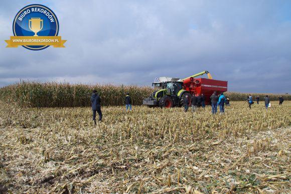 Największy plon kukurydzy naziarno - rekord