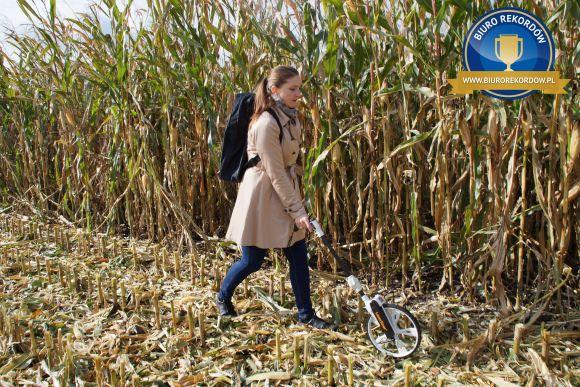 Plon kukurydzy naziarno - Rekord Polski