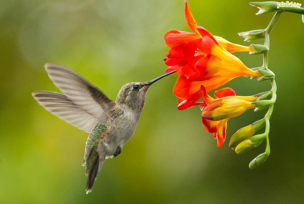 Kwiat koliber