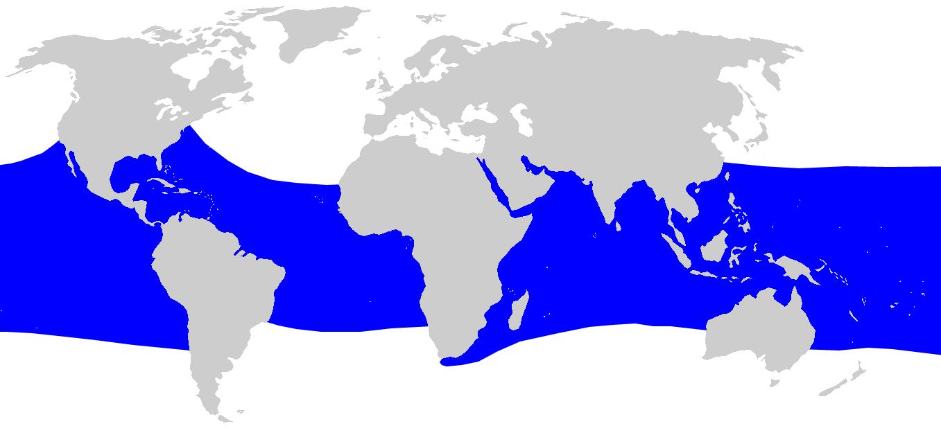 Rekin Wielorybi - występowanie