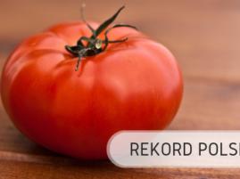 Rekord Polski - pomidor