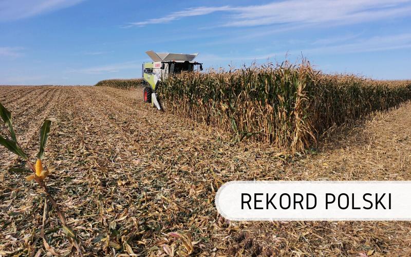 Rekord Polski - największy plon ziarna kukurydzy z hektara