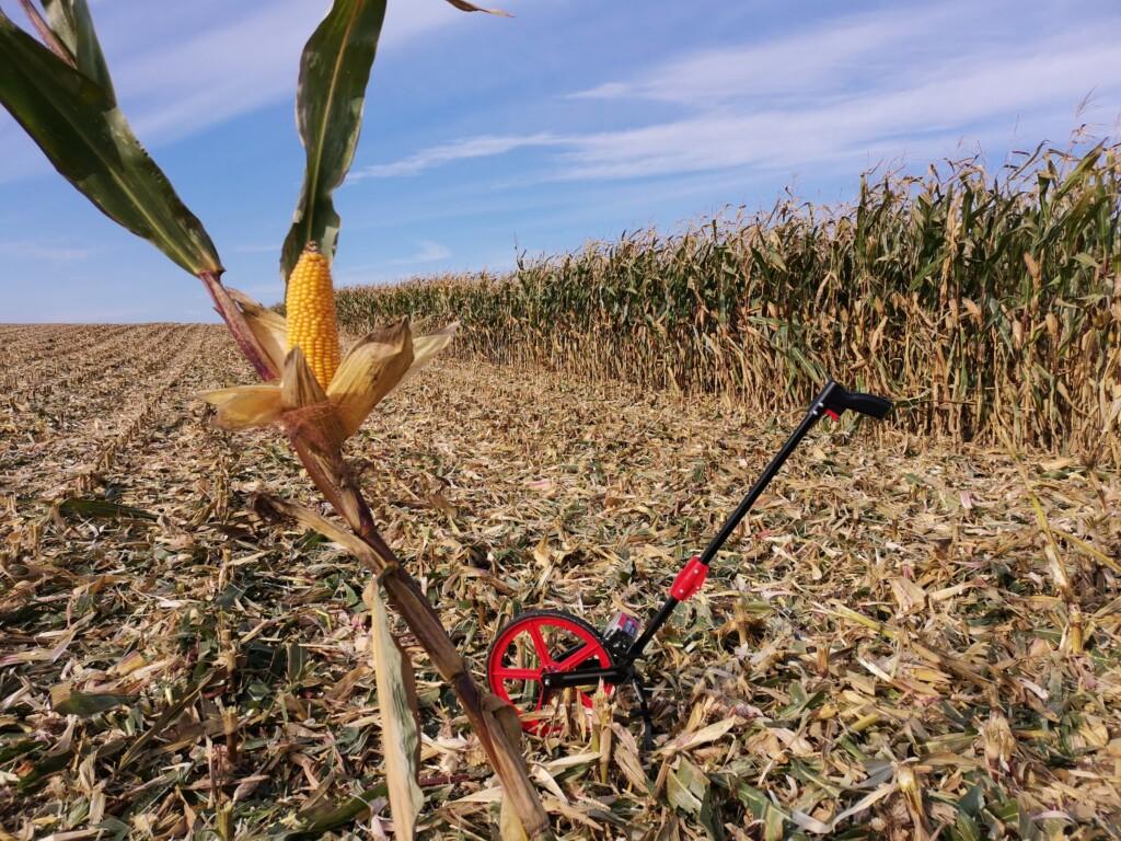 rekord-plonu-kukurydzy
