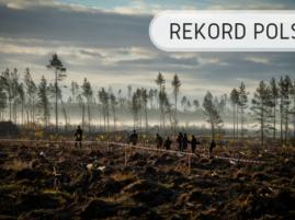 Wzór z drzew - Rekord Polski