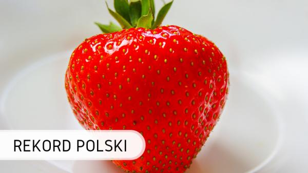 Polska - truskawka
