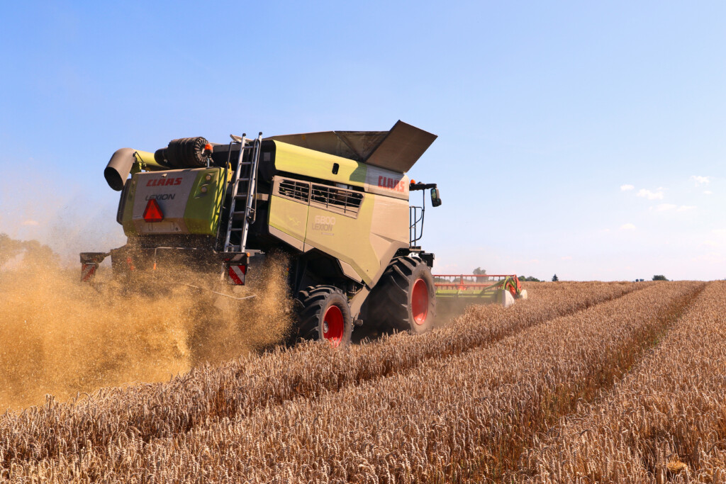 Rekord Polski wplonie pszenicy