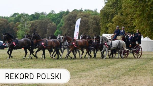 Polska - konie