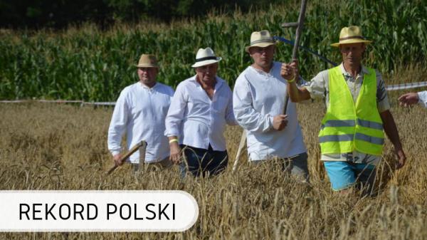 Polska-zboże