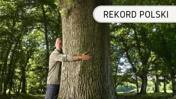 Polska - drzewa