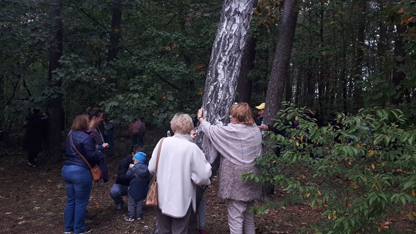 drzew-tulenie