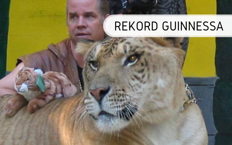 Rekord Guinnessa - Legrys