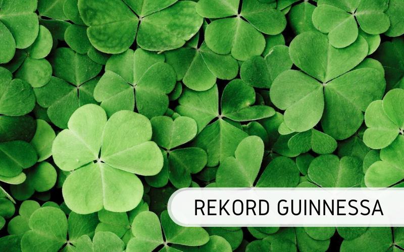 Koniczyna - rekord Guinnessa