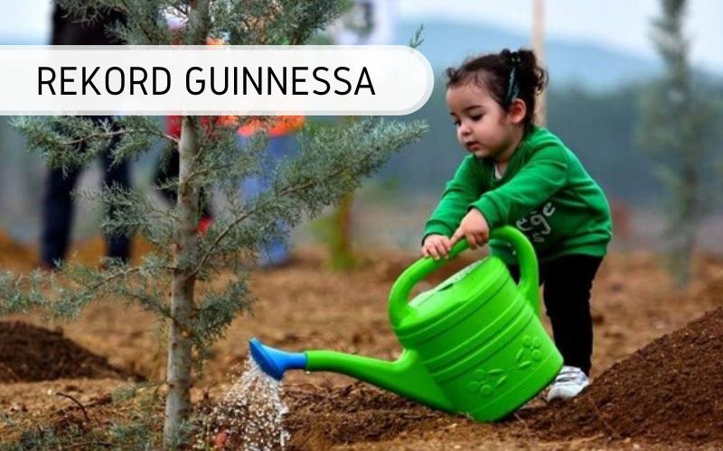 Najwięcej drzew posadzonych wgodzinę przezgrupę osób