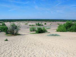 Największa pustynia w Polsce