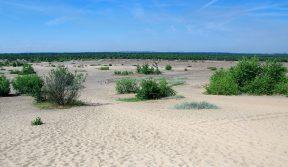 Największa pustynia wPolsce