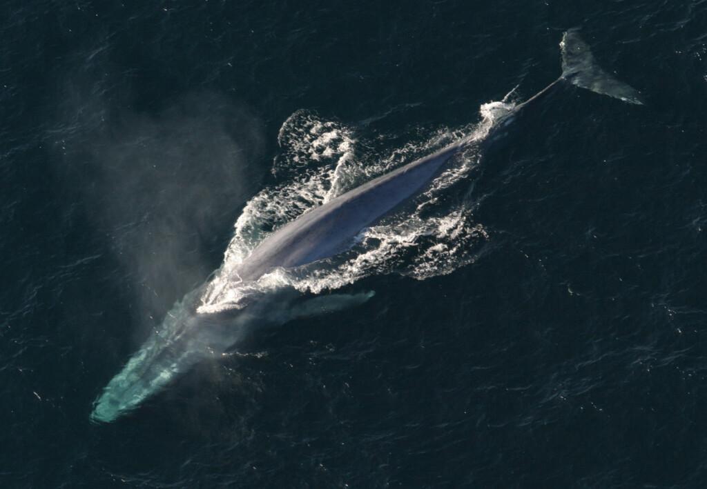 Największy ssak świata