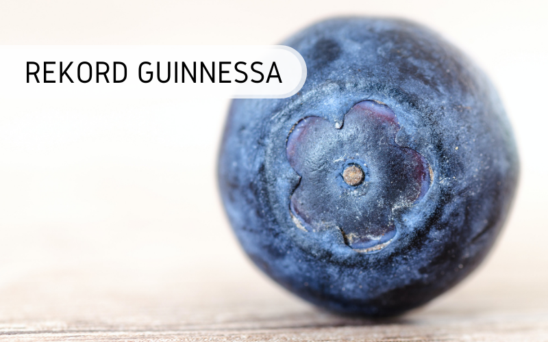 Rekord Guinnessa - największa borówka