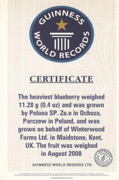 Poski Rekord Guinnessa nanajwiększą borówkę
