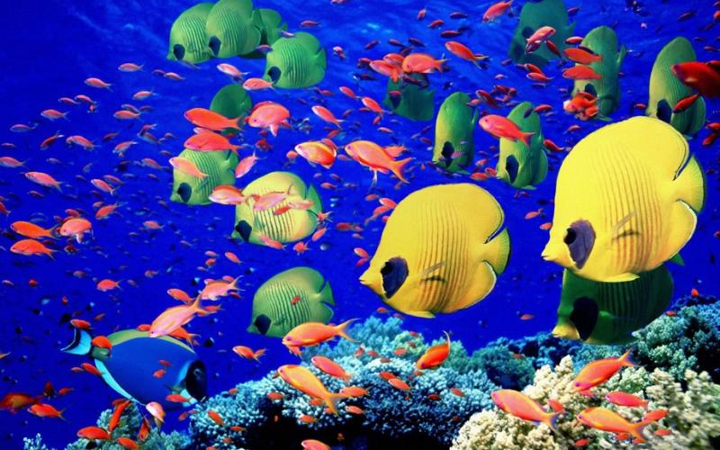 najmniejsze-morza-świata