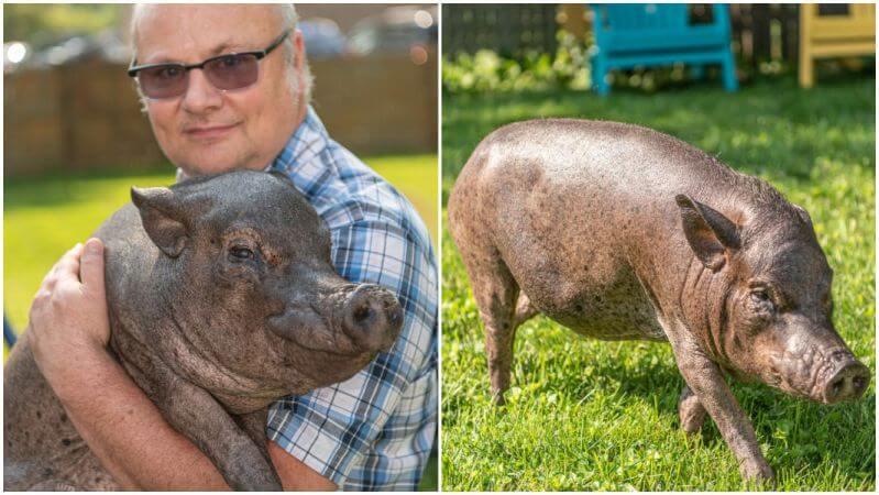 Najstarsza świnia naświecie - Baby Jane
