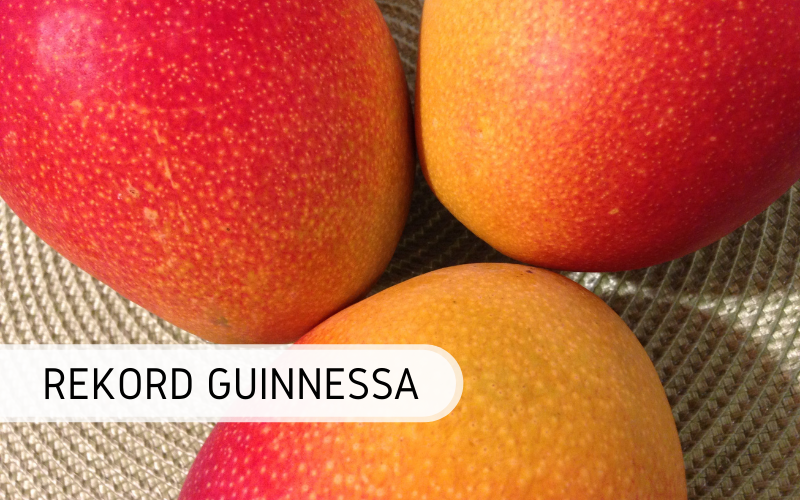 Rekord Guinnessa - największe mango