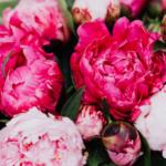 bukiety zkwiatów