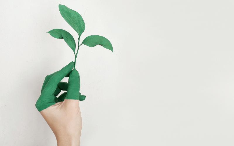 Rekord Polski lekcja ekologii