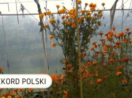 Rekord Polski najwyższa aksamitka